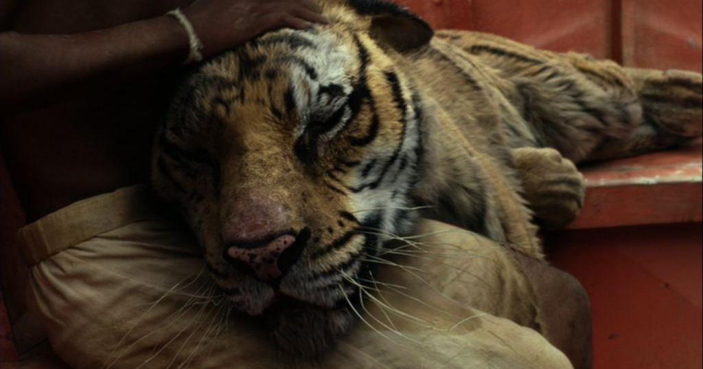 Pi stringe tra le sue braccia la tigra Richard Parker in una posa che ricorda la Passione.